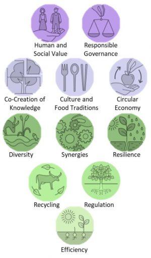 FAO Principles